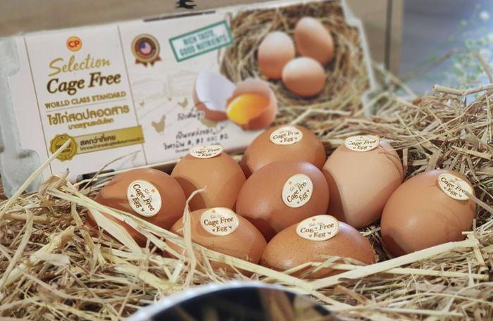 ไข่ไก่ เคจฟรี ซีพีเอฟ จากแม่ไก่อารมณ์ดี เลี้ยงแบบธรรมชาติ เพื่อสุขภาพที่ดีของผู้บริโภค